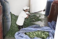 Sacos vacíos que esperan del trabajador para en Coca Leaves Depot en Chulumani Fotos de archivo