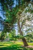 Sacramento California miasta ulicy i linii horyzontu widoki zdjęcia royalty free