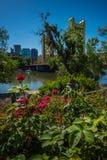 Sacramento California. Sunny Day in Sacramento California Vertical Composition stock images