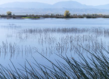 Sacramento National Wildlife Refuge Royalty Free Stock Photography