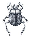 Sacred beetle of scarabs tattoo art. Dot work tattoo. Insect. Symbol of eternal life, resurrection, revival. Sacred beetle of scarabs tattoo art. Dot work tattoo stock illustration
