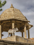 Sacred cow in India Stock Images