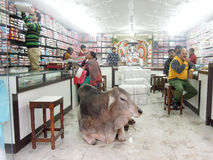 Sacred Cow lying in the middle of a shop Stock Photo