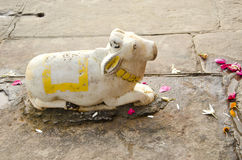 Sacred cow marble statue in Varanasi temple Royalty Free Stock Photo