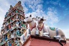 Sacred Cows Guarding an Indian Temple. Focus on a pair of sacred cows guarding the facade of a Hindu temple shown here in deliberate shallow depth of field Stock Photo