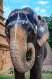Sacred elephant in Hindu temple Brihadishwara Royalty Free Stock Images