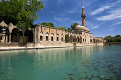 Sacred Fish Pool. Turkey. Sanliurfa. Sacred Fish Pool with sacred carp - legendary lake where Abraham was thrown into the fire by King Nimrod (God saved him by Stock Photo