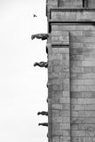 Sacred Gargoyles BW Stock Images