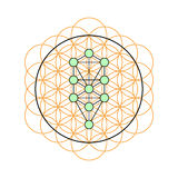 Sacred geometry. Tree of life in a Flower of life Royalty Free Stock Photo