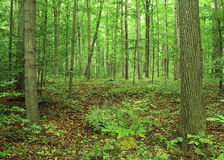 The Sacred Grove Stock Photography