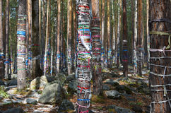 Sacred Grove of tears. Zalaal - tapes, tied to the trees. Arshan village, Buryatia Royalty Free Stock Photography