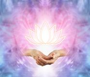 The Sacred Lotus. Female cupped hands with an illuminated lotus flower symbol floating above on a pink purple blue and white energy background Royalty Free Stock Images