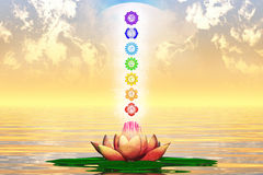 The Sacred Lotus Royalty Free Stock Images