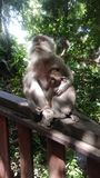 Sacred Monkey Forest in Bali Stock Photography