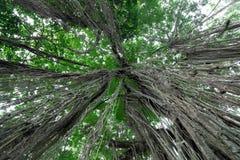 Sacred Monkey Forest Sanctuary in Ubud. Bali Island, Indonesia Royalty Free Stock Photo