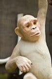 Sacred monkey stone Royalty Free Stock Image