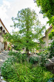 Sacred sequoia in Bachkovo Monastery Royalty Free Stock Photo