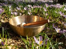 Free Sacred Sound, Tibetan Singing Bowl Outside In Nature Stock Photos - 144100823