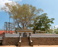 Sacred Sri Maha Bodhi tree in Anuradhapura, Sri Lanka Royalty Free Stock Photo