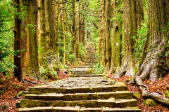 Sacred Trail in Japan. The Kumano Kodo trail at Daimon-zaka slope, a sacred trail in Nachi, Wakayama, Japan stock images