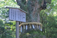 Sacred tree in Atsuta Shrine Nagoya Japan Stock Photography