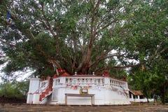 Sacred tree Royalty Free Stock Photography