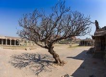 The sacred tree Stock Photos