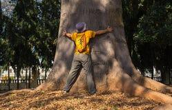 The sacred tree Stock Photo
