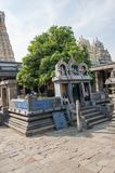 Sacred tree mango dedicated to the union of Siva and Parvati. Ekambareswarar temple is a Hindu temple. Kachi Ekambam old Stock Photography