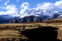 Sacred Valley- Peru. Andes mountains surrounding the Sacred Valley, Peru Royalty Free Stock Photo