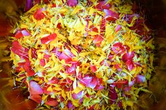 A sacred water made of fresh water spreading by flower petals. Used for pouring on the older`s hand during Thai New Year, or Songkran Festival to bless and ask Royalty Free Stock Photography