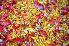 A sacred water made of fresh water spreading by flower petals, used for pouring on the older`s hand during Thai New Year. Or Songkran Festival to bless and ask Stock Photography