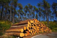 Sacrifice d'arbre Image libre de droits