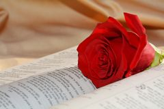 The sacrifice of Jesus. Red rose on the opened Bible evokes the sacrifice and suffering of Jesus stock images