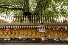 Sacrifices under the bodhi tree from the Kelaniya Raja Maha Vihara temple in Colombo Stock Photos