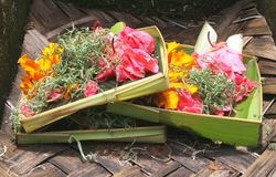 Sacrificing flowers in a Hindu temple,Bali, Indonesia  Royalty Free Stock Images