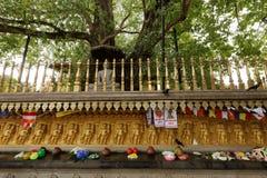 Sacrificios debajo del árbol del bodhi del templo de Kelaniya Raja Maha Vihara en Colombo fotos de archivo