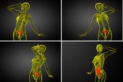 Sacrum bone. 3d rendering  medical illustration of the sacrum bone Stock Photography