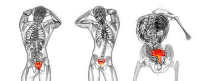 Sacrum bone. 3d rendering medical illustration of the sacrum bone Royalty Free Stock Image