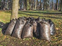 Sacs avec des feuilles d'automne en parc photo libre de droits
