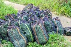 Sacs avec des feuilles de thé sur le champ Photos libres de droits