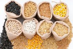 Sacs avec des grains de céréale avoine, orge, blé, maïs, haricots, pois, soja, tournesol Photo libre de droits