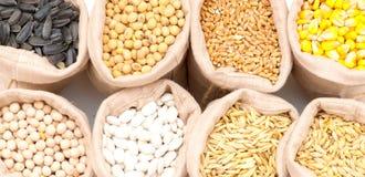 Sacs avec des grains de céréale d'isolement Image stock