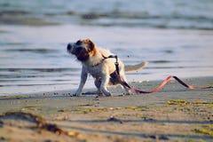 Sacudida del perro Imagen de archivo libre de regalías