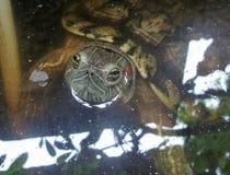 Sacudida espigada roja del resbalador hacia arriba y hacia abajo en la charca de agua Foto de archivo libre de regalías