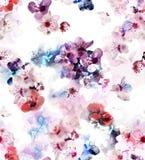 Sacura blossom pattern Royalty Free Stock Photos