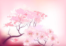 Sacura spring cherry tree Royalty Free Stock Images