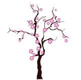 Sacura tree Stock Photography