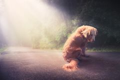 Sad, abandoned dog in the middle of the road /high contrast image royalty free stock image