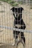 Sad abandoned dogs Stock Photo